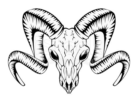 skull clipart bighorn sheep pencil and in color skull
