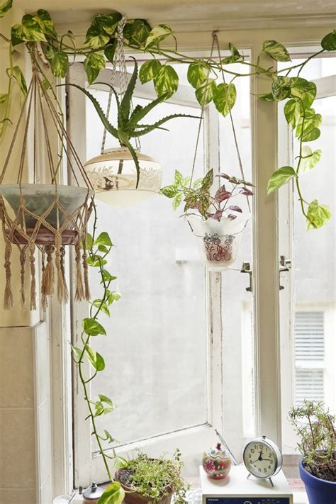 Window Plant Hanger - best 25 indoor hanging plants ideas on