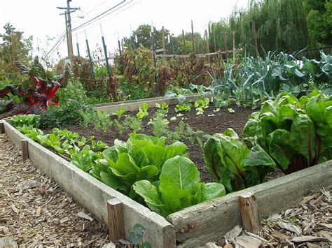 Easy Vegetable Garden Ideas Diy Awesome Vegetable Gardening Tips Easy Diy And Crafts
