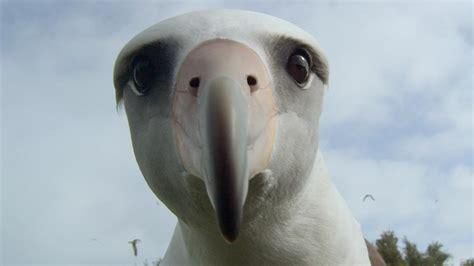 albatross mountainfilm