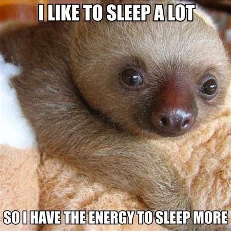 why does my sleep so to me quote w adorable baby sloth why i sleep a lot