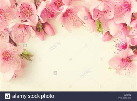 cornice di fiori cornice di fiori di colore rosa rami foglie e petali di