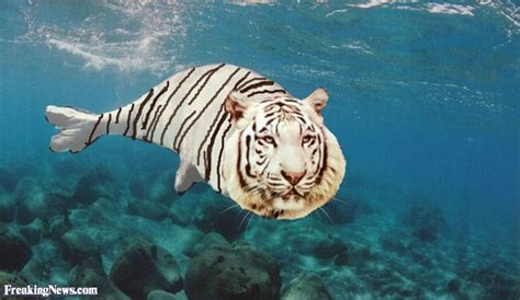 Seal Tiger White Tiger Fish Pictures Freaking News