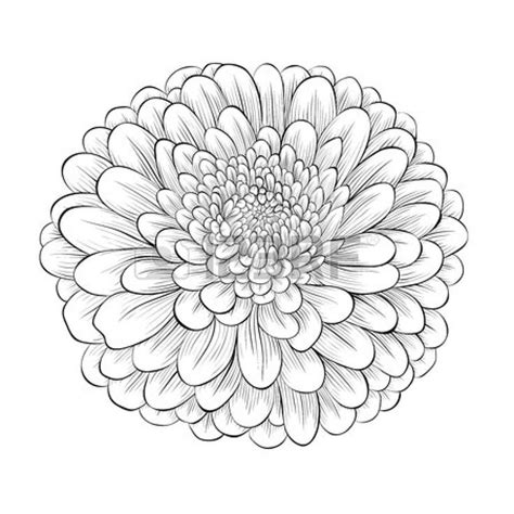 aster tattoo designs pin by meagan ayala on tattoos piercing
