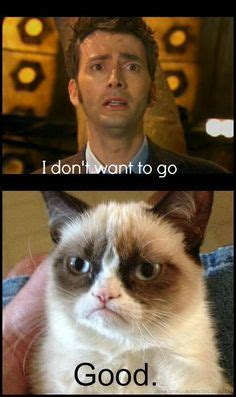 Doctor Who Cat Meme - grumpy cat humor on pinterest grumpy cat doctor who