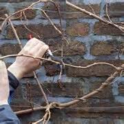 talpe in giardino cosa fare talpe domande e risposte giardinaggio talpe l
