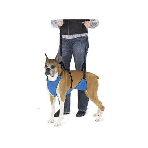 can dogs get aids a support harness to aid mobility and for lifting disabled dogs zoomadog