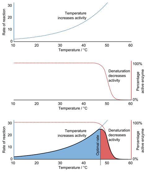protein vs enzyme denaturation biochemistry