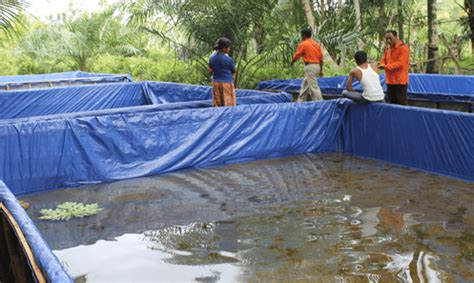 Jual Kolam Terpal Koi metode ternak lele dengan kolam terpal okdogi