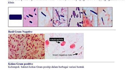 Hematologi Bkk Untuk Smk Analis Kesehatan macam macam pewarnaan bakteri 171 analis smk bantul