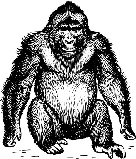 ape clipart ape clip free vector in open office drawing svg svg