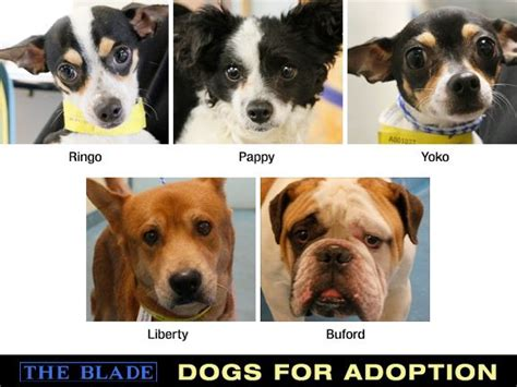 puppies for adoption toledo ohio lucas county dogs for adoption 5 25 2013 the blade