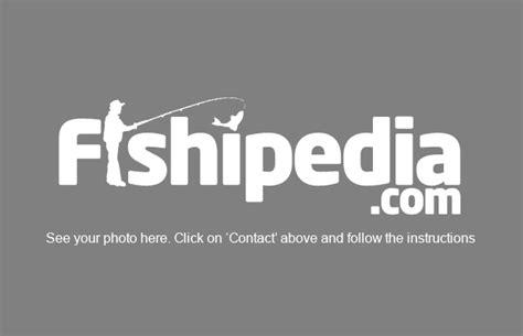 key west boat captain jobs capt justin rea florida keys fishing guides charters