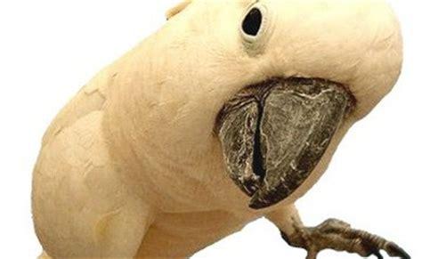 animali da gabbia uccelli da gabbia quanto vivono le specie pi 249 comuni i