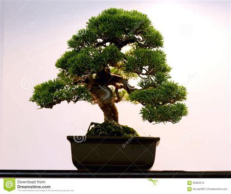albero in vaso albero conservato in vaso artistico dei bonsai in vaso di