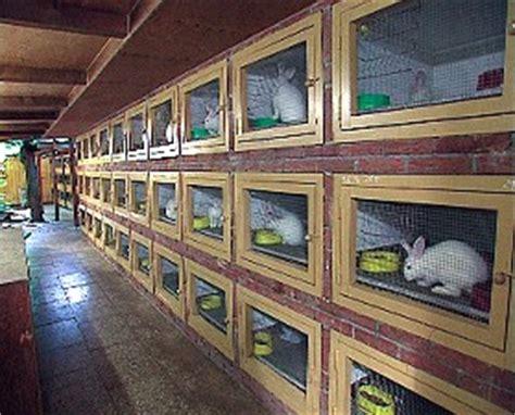 stall deutsche riesen kaninchen h 252 pfen durch die welt kleintierzuchtverein