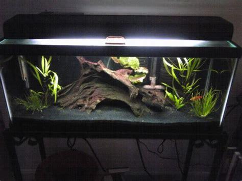 aquarium design with black sand 52 best fish tank assorted images on pinterest fish