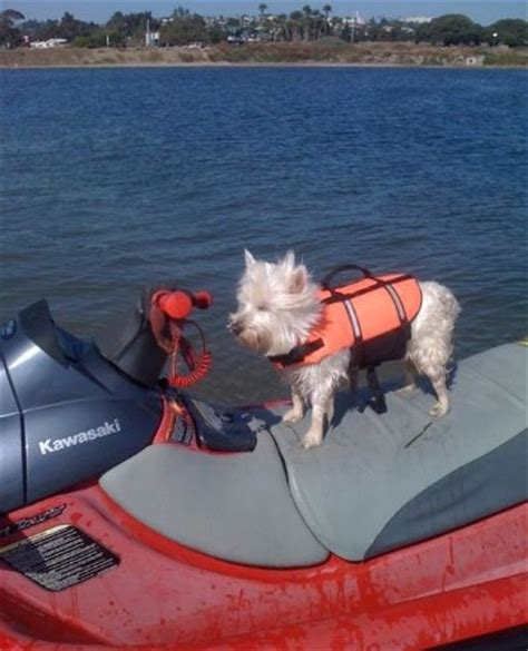 dogs on skis 1000 images about atv s jet skis boats snowmobiles dirtbikes on logos