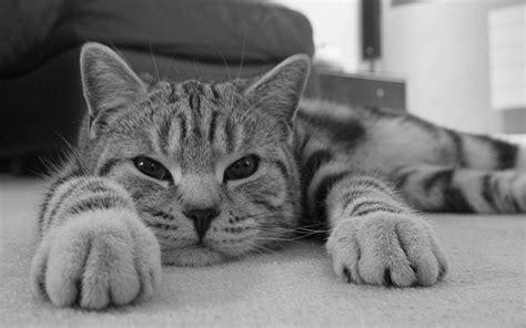 wallpaper lazy cat hd lazy cat wallpaper download free 121936