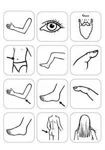 therapiematerial logop 228 die bildersammlung 246 rperteile madoo net