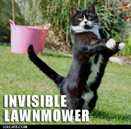 Invisible Cat Meme - invisible lawnmower cat meme cat planet cat planet