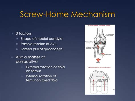 the knee esat 3600 fundamentals of athletic