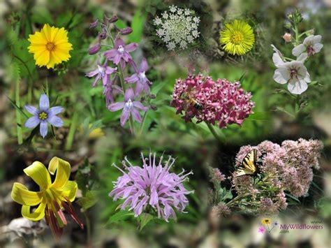 Flowers From The Garden Desktop Flower Wallpapers Beautiful Flower Wallpapers