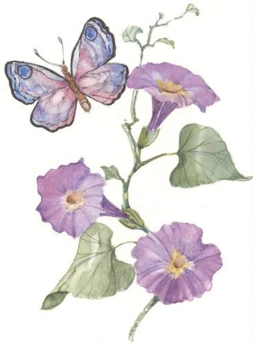 butterfly with morning glories 4x6 watercolor cshoresinc
