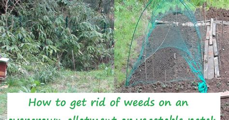 The Green Fingered Blog How To Get Rid Of Weeds On An How To Get Rid Of Weeds In Vegetable Garden