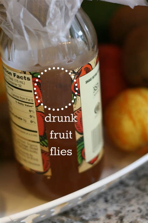 how to get rid of fruit flies in bathroom how to get rid of fruit flies today s creative life