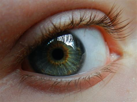gold eye color best 25 gold ideas on broken eyeshadow