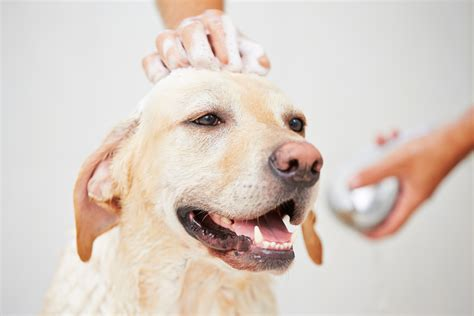how much to tip groomer grooming tips archive animal behavior college