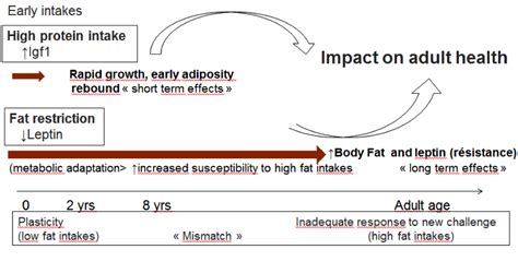 healthy fats breast growth of nutrients in promoting adiposity development the
