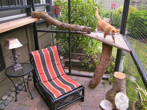 cat patio catio spaces helps cat owners build safe outdoor havens