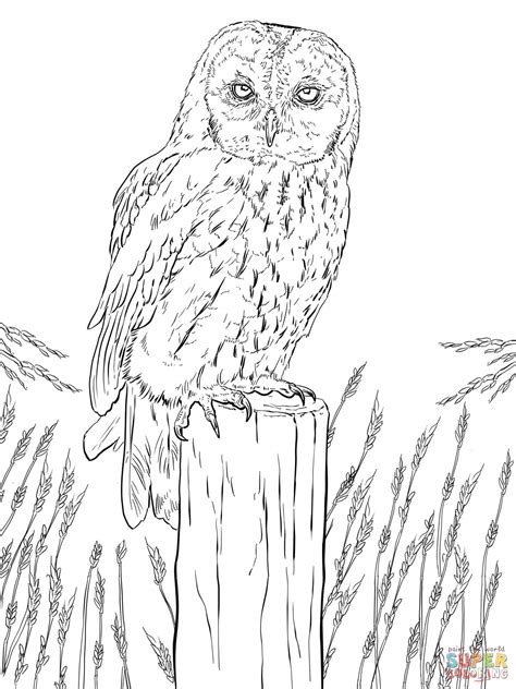 Tawny Owl Coloring Page | tawny owl coloring page free printable coloring pages
