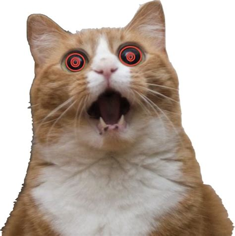 scared cat meme 100 images scared kitty by xing meme