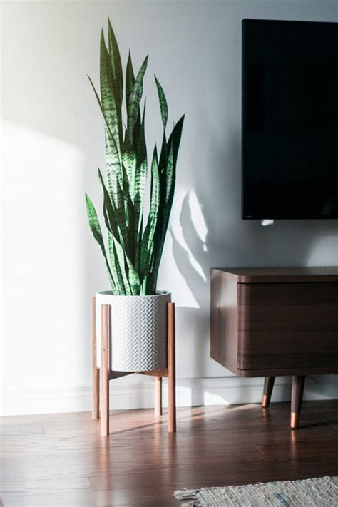 plants  grow  sunlight   plants  grow