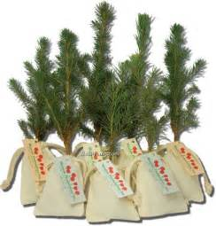 wholesale evergreen tree seedling in a natural cotton bag