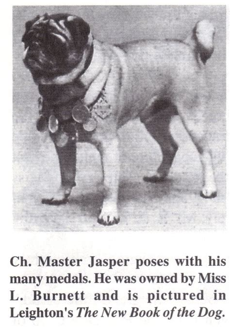 the history of pugs pug history in photos part 2