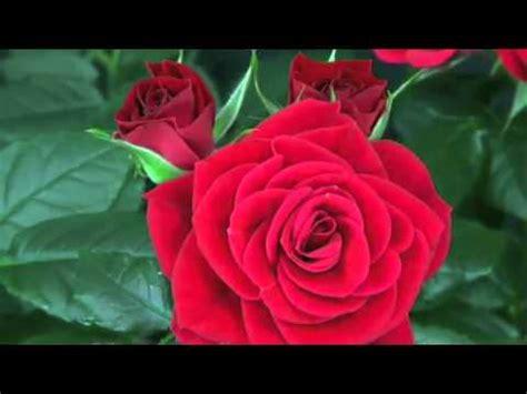i fiori poesia la poesia dei fiori