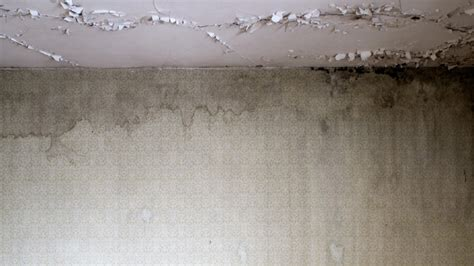 64 luftfeuchtigkeit im schlafzimmer schimmel im schlafzimmer trotz luften lithofin kf