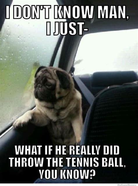 Pug Meme - introspective pug know your meme