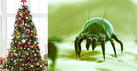 christmas tree bugs pictures make sure to take your tree it s likely crawling with bugs