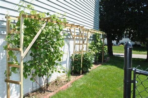 backyard grape vine trellis designs best 25 grape vine trellis ideas on pinterest grape arbor grape vine plant and