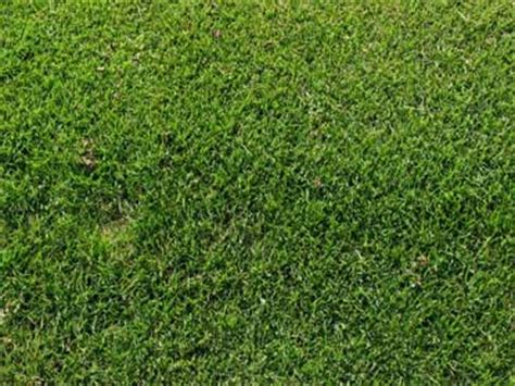 couch grass care image grass grasses lawn lawns lawn grass lawn grasses