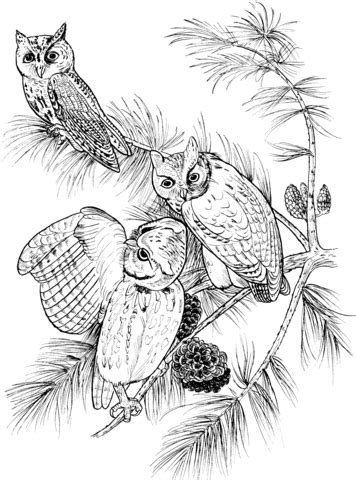 screech owl coloring page search results for owl coloring page page 2 calendar 2015
