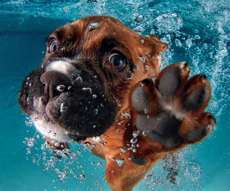 best swimming dogs 46 best dogs swimming water paddle images on drawings