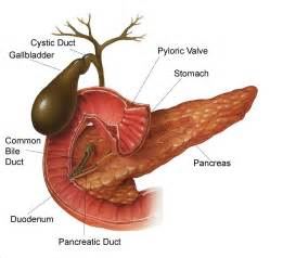 bad foods for gallbladder disease health and fitness