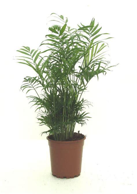 best indoor plant 123 best house plants images on pinterest succulents