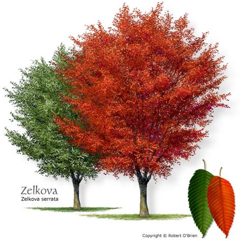 Green Vase Zelkova Problems by Tree Selector Tree Description